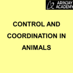 Control and Coordination in Animals