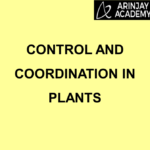 Control and Coordination in Plants