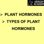 What are Plant Hormones