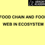 Food chain and Food web in Ecosystem