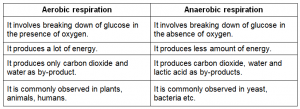 difference between aerobic respiration and anaerobic respiration