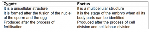 difference between zygote and foetus