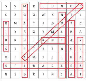 respiration puzzle ans