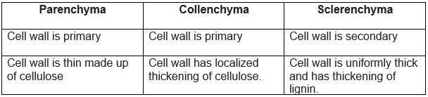Differentiate between parenchyma, collenchyma and sclerenchyma