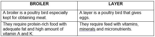 What are the differences between broilers and layers in their management